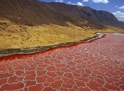 Живое озеро Натрон в Танзании