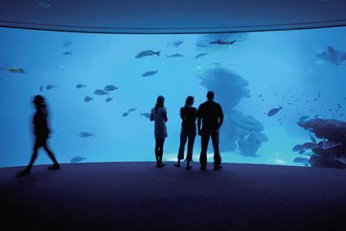 Пальма аквариум и аквапарк