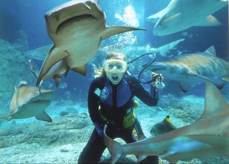 Плавание с акулами в Мексике